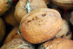 Fresh nut Royalty Free Stock Images