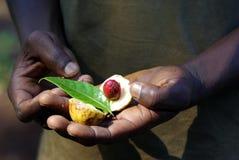 Free Fresh Nutmeg Stock Photography - 21808712