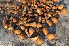 Fresh Nutmeg on stone background and close up. Fresh brown Nutmeg on stone background and close up Stock Photography