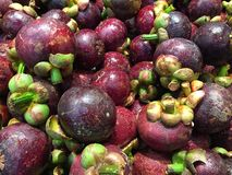 Fresh Nutritious Mangosteen Royalty Free Stock Images