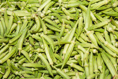Fresh and nutritious okra vegetable Royalty Free Stock Photography