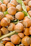 Fresh nuts Stock Images