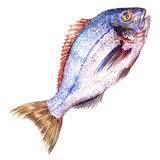 Fresh ocean blue fish isolated, watercolor illustration, white background Stock Photo