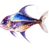 Fresh ocean blue yellow fish isolated, watercolor illustration, white background Stock Photos