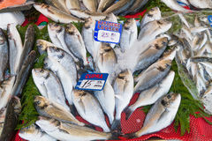 Fresh from the ocean bream fish catch. Royalty Free Stock Photos
