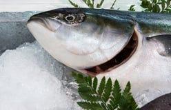 Fresh ocean fish Stock Photo