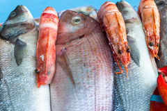 Fresh from the ocean fish variety. Royalty Free Stock Photos