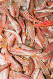 Fresh from the ocean red fish variety Stock Photo