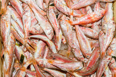 Fresh from the ocean red fish variety Royalty Free Stock Images