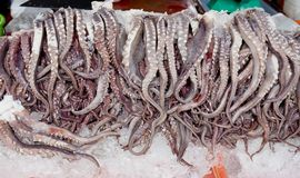 Fresh octopus arms on ice in market.  royalty free stock image