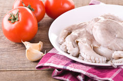 Fresh octopus. Stock Images
