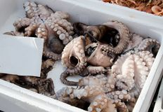 Fresh octopus. In crater on market for sale Stock Photos
