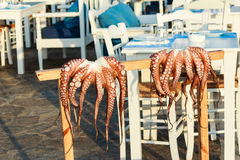 Fresh Octopus hanging in front of a Greek Seafood Restaurant. Fresh Octopus hanging on stand in front of a Seafood Restaurant Stock Images