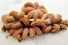 Fresh Octopus on ice Stock Photo