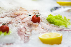 Fresh octopus on ice Stock Image