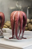 Fresh octopus Royalty Free Stock Photography