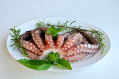 Fresh octopus 3 Royalty Free Stock Images