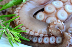 Fresh octopus 6 Royalty Free Stock Photos