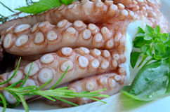 Fresh octopus 5. Fresh octopus in a kitchen, with green basil and rosemary on white porcelain oval plate, ready for barbecue or cooking Stock Photo