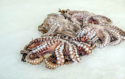 Fresh Octopus at the Limassol fish market. Royalty Free Stock Photos