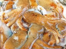 Fresh Octopus royalty free stock images