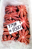 Fresh octopus. Octupus tako is sold by several vendors at the huge Tsukiji fish market in Tokyo, Japan Stock Photography