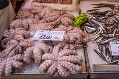 Fresh octopus for sale in outdoor fish market in Venice, Italy. Royalty Free Stock Photography