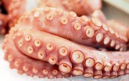 Fresh octopus at Valencian market Royalty Free Stock Photography