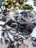 Fresh octopuses in the ice on the market view. Fresh octopuses in the ice on the market royalty free stock image