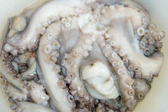 Fresh octopuses prepared to sell at the market Stock Photography