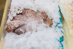 Fresh octopuses prepared to sell at the market stock photos