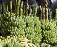 Fresh off the Farm. Small green bananas for sale at a local market in Hue, Vietnam still on the branches on which they grew Royalty Free Stock Photography