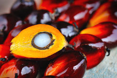 Fresh oil palm fruits Royalty Free Stock Photography