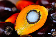 Fresh oil palm fruits Stock Photos