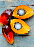 Fresh oil palm fruits Royalty Free Stock Photos