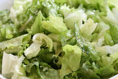 Fresh Oily organic salad Royalty Free Stock Images