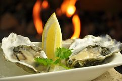 Fresh oisters. Fresh oysters with lemon wedge royalty free stock image