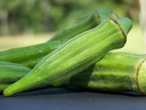 Fresh Okra Royalty Free Stock Images