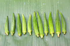Fresh okra Stock Image