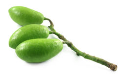 Fresh olive. Indian olive over white background Stock Photography
