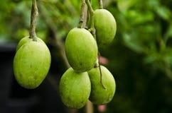 Fresh olive branch Stock Photos