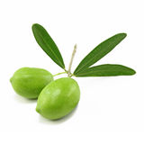 Fresh olive branch Royalty Free Stock Image