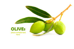 Fresh olives Stock Image