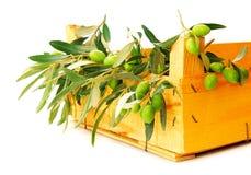 Fresh olives Stock Image