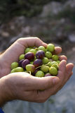 Fresh olives Royalty Free Stock Image