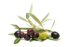 Fresh olives Royalty Free Stock Image