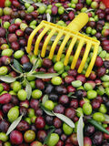 Fresh olives royalty free stock photos