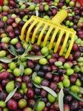 Fresh olives Royalty Free Stock Photos