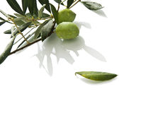 Fresh olives on branch Stock Photography