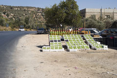 Fresh olives on display at a road side stand. Jordan Royalty Free Stock Photography